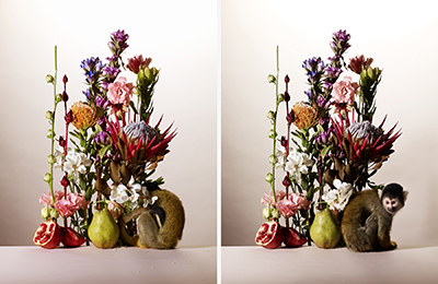 flowers_017