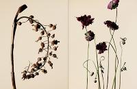 driedflowers002