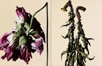 driedflowers003