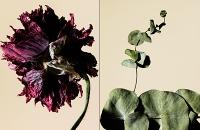 driedflowers004