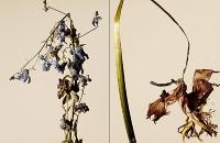 driedflowers007