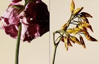 driedflowers008