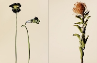 driedflowers010