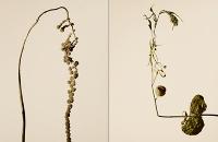driedflowers011