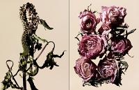 driedflowers013