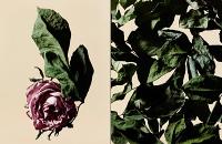 driedflowers014