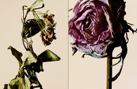 driedflowers018