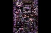 flowers014