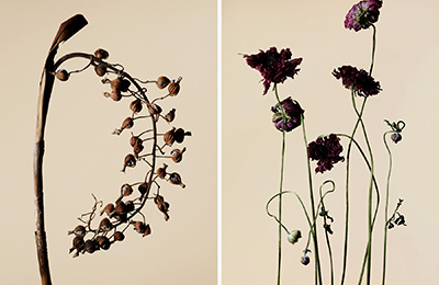 driedflower_002