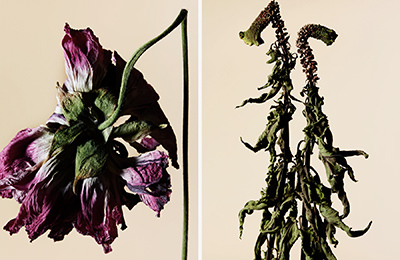 driedflower_003