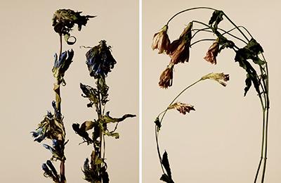 driedflower_005
