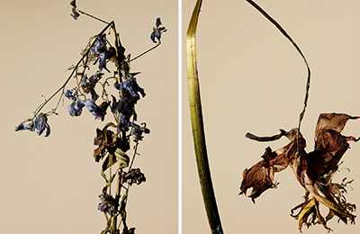 driedflower_007