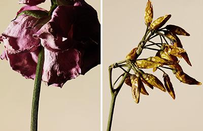 driedflower_008