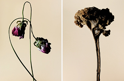 driedflower_009