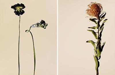 driedflower_010