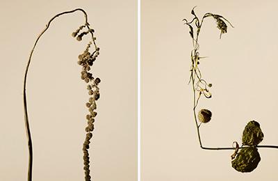 driedflower_011