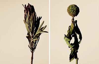 driedflower_012