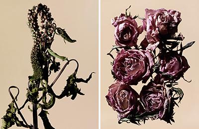 driedflower_013