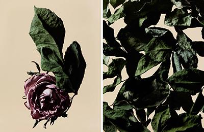 driedflower_014
