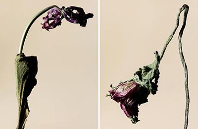 driedflower_015
