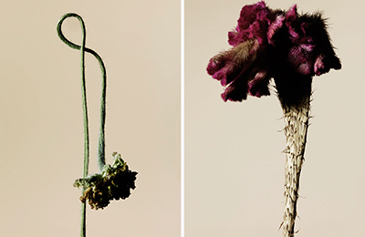 driedflower_017