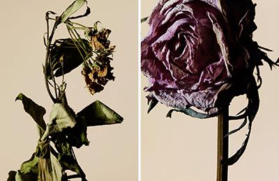 driedflower_018
