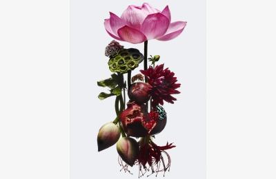 flowers_00102
